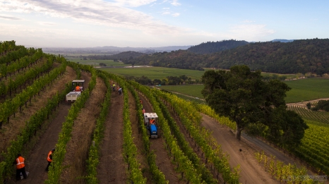 Shot for Shafer Vineyards/Napa Films